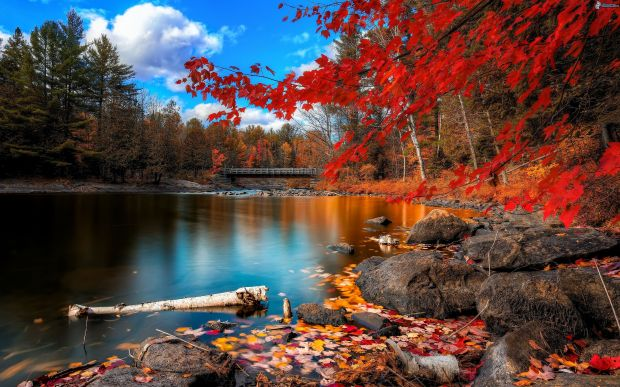 paisaje-de-otono,-hojas-de-colores,-nivel-de-aguas-tranquilas,-puente-162719